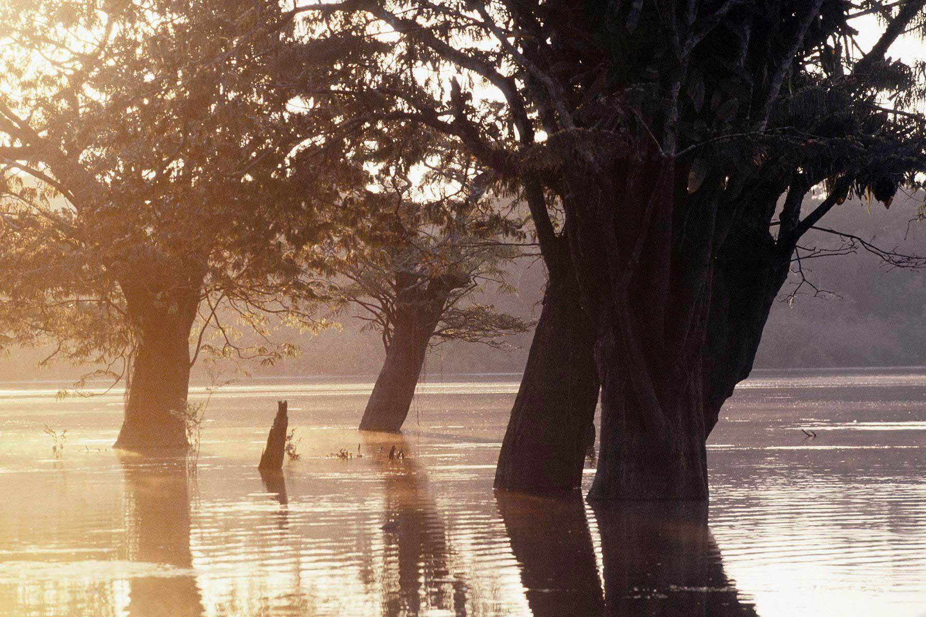 Cuyabeno Wildlife Reserve, Amazon basin, Ecuador