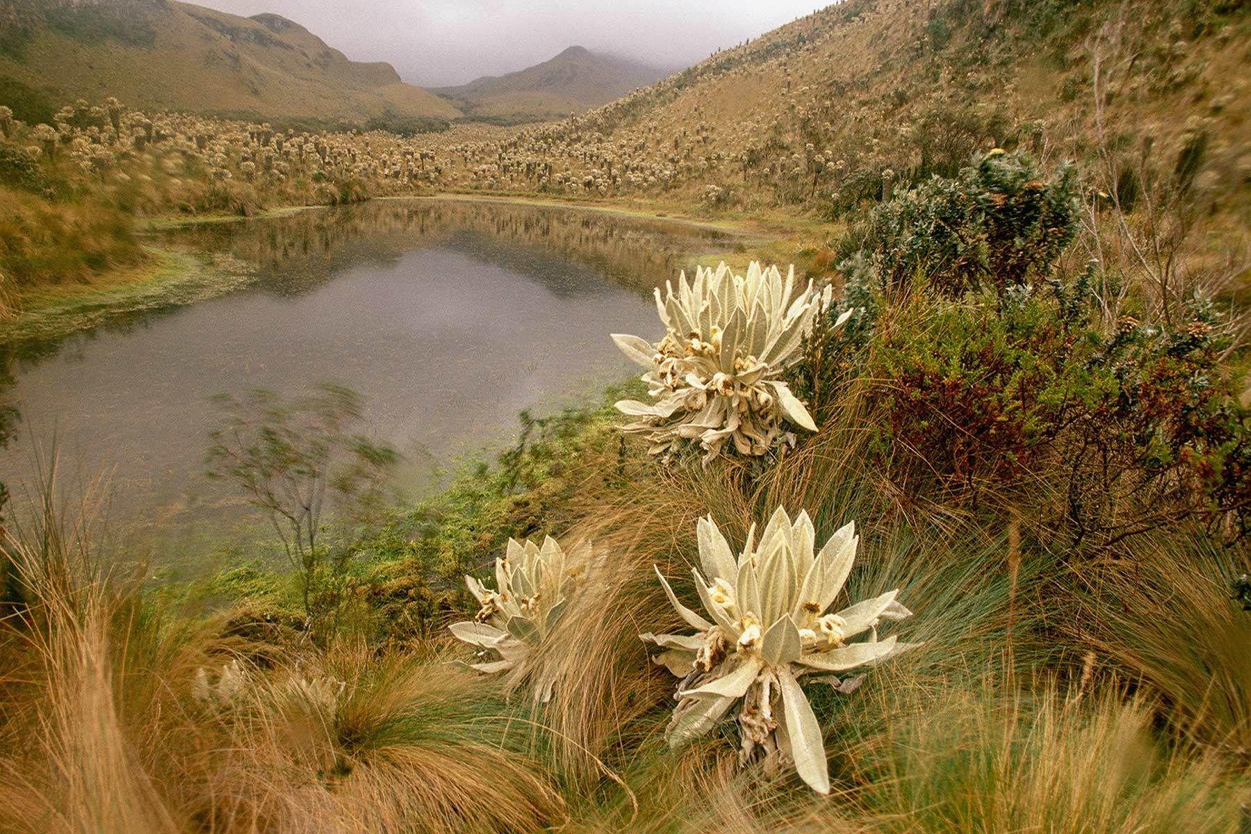 Andean Paramo landscape