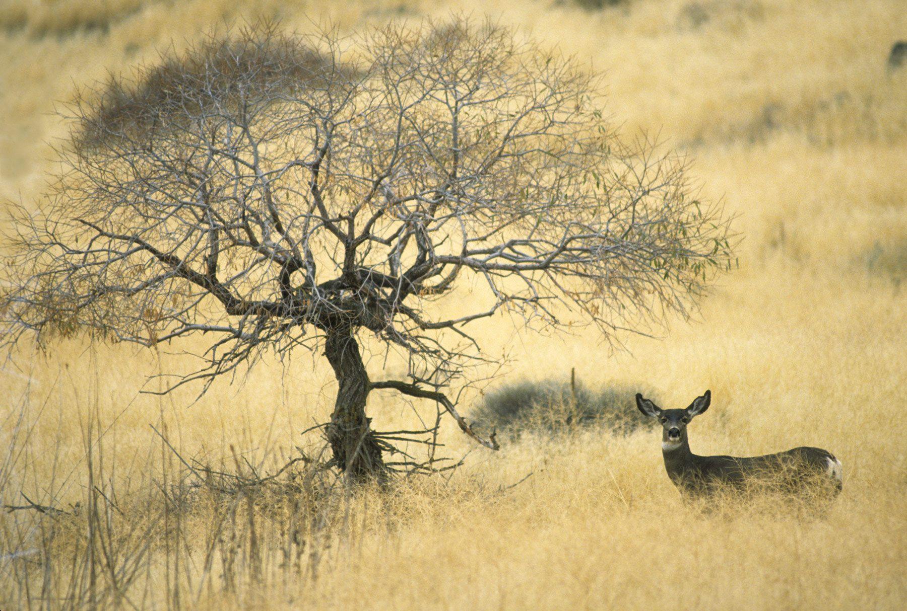 Tulelake National Wildlife Refuge