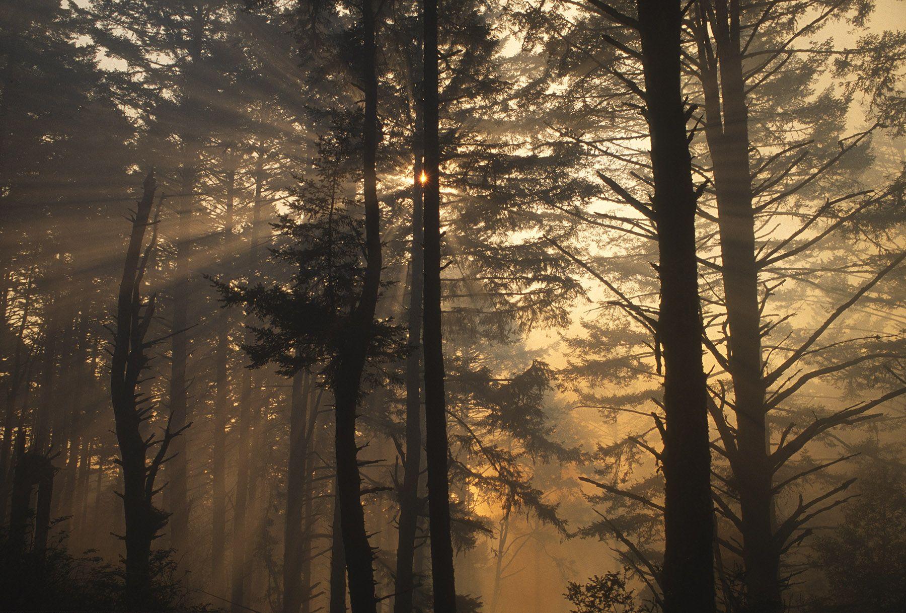 D28513BF_Vision Fire Douglas fir forest near Sky Trail afternoon sunburst-.jpg