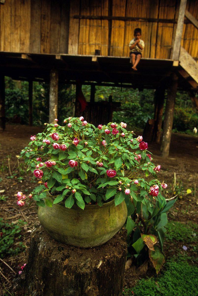Lowland Quichua home
