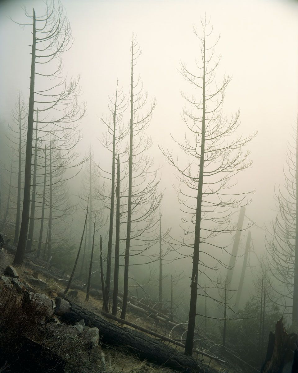2002 Biscuit Fire, Kalmiopsis Wilderness, Oregon-7 Years Later