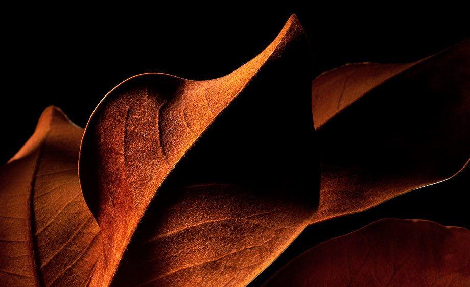 1Reddish_Leaf_009_crop_www.jpg