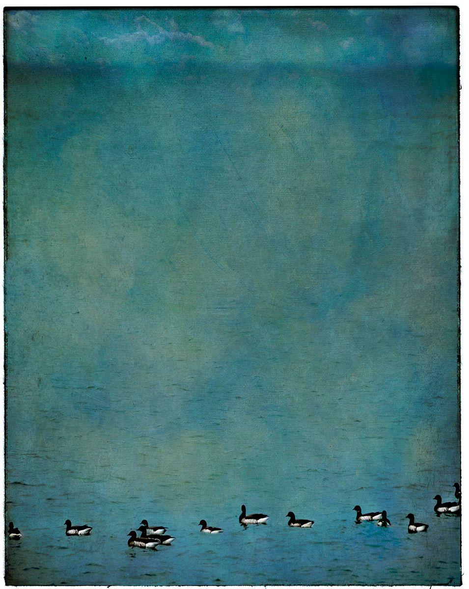 Geese & Blue Sky