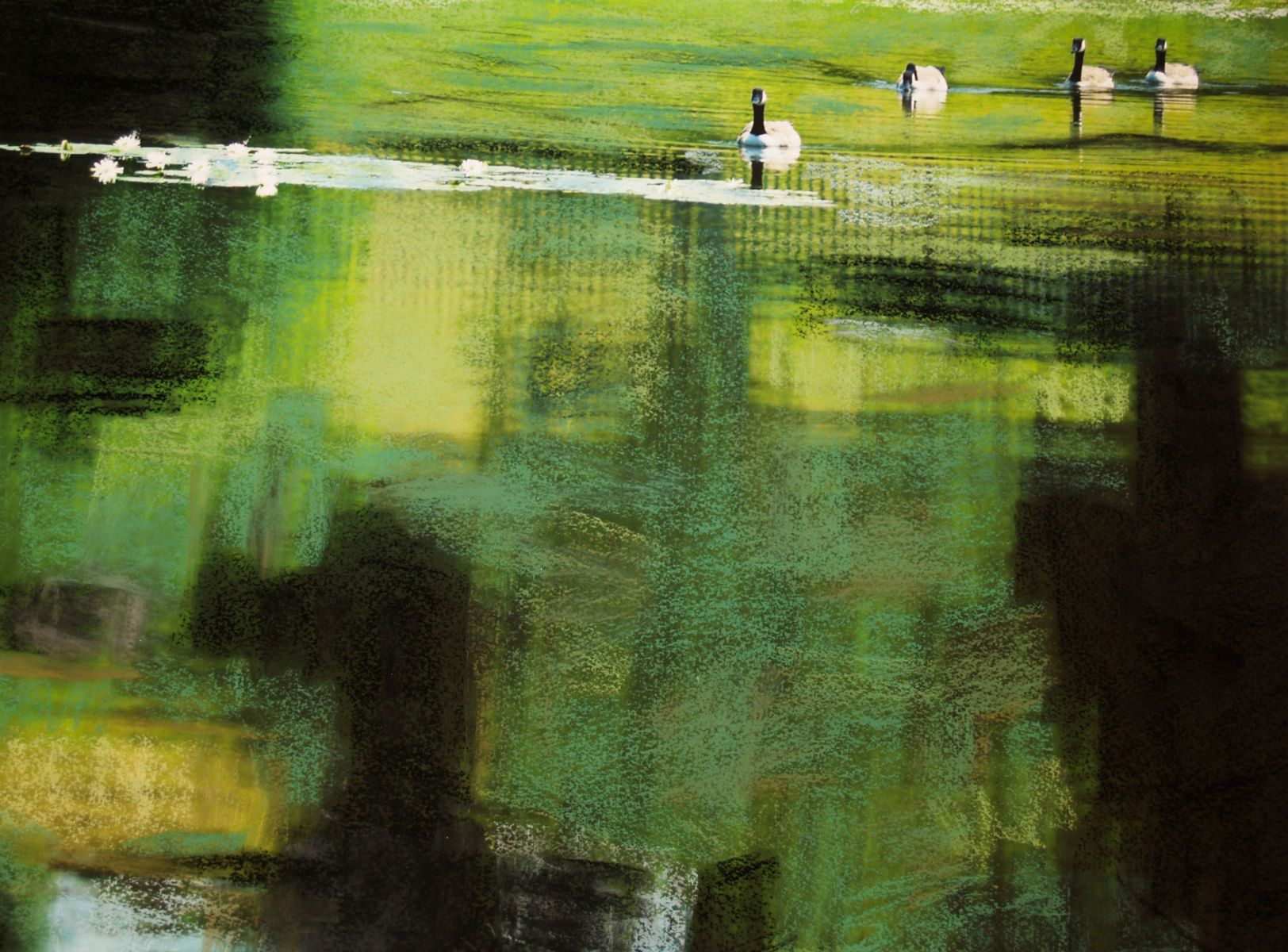 Geese On Pond