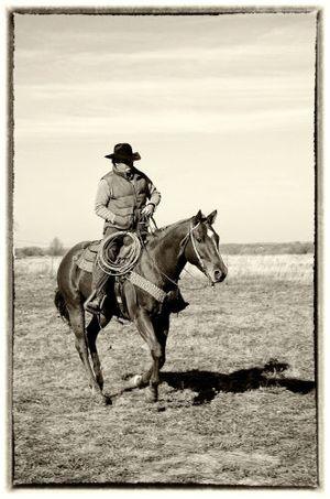 A Cowboy & His Horse