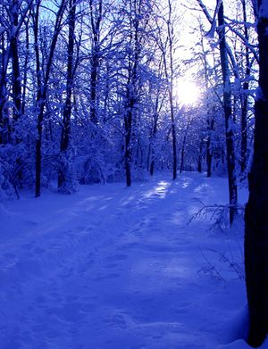 """""""Winter Blues"""": Black Marsh, Albany County, NY"""