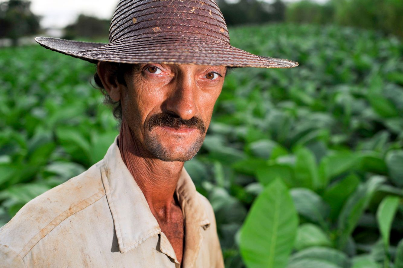 A Cuban tobacco farmer poses for a portrait while working in his field.
