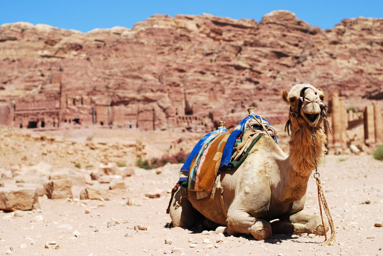 A camel smiles for the camera in Petra, Jordan