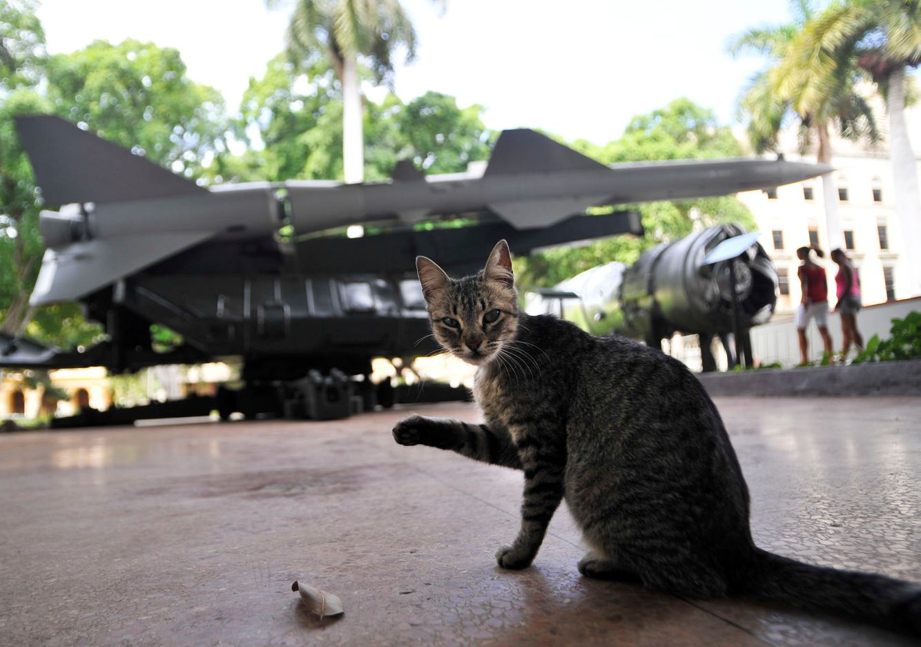 A cat appears to be waving in front of Cuban missiles on display at the Revolutionary Museum in Havana, Cuba.