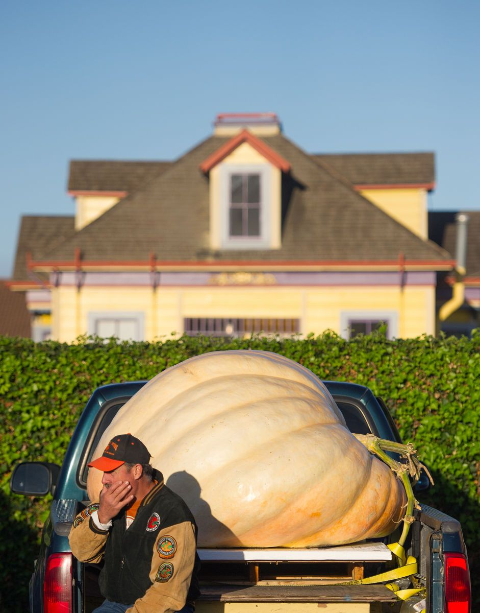 HEAVY PUMPKINS: The defending champion sits near his current entry to the World's Heaviest Pumpkin competition