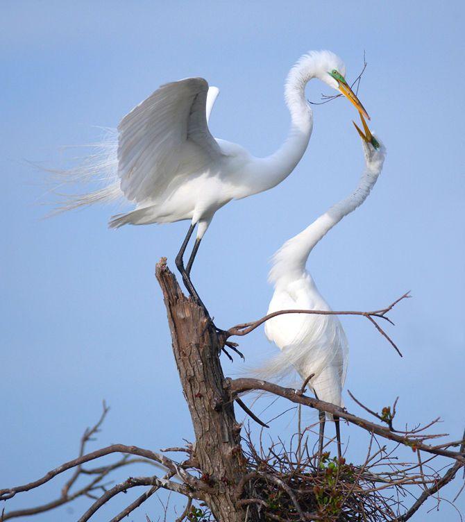 1harris_julieanne_egrets.jpg