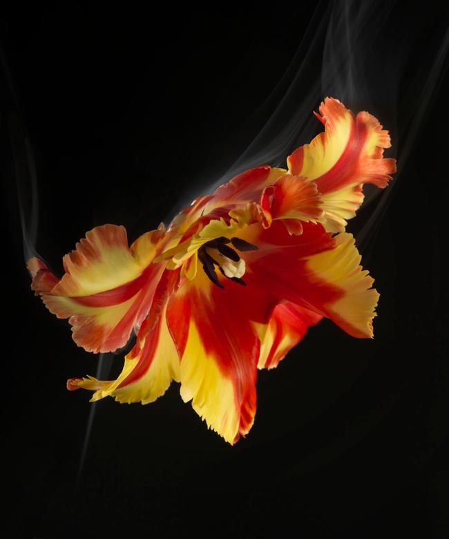 bloem-robertpeekfotografie_003