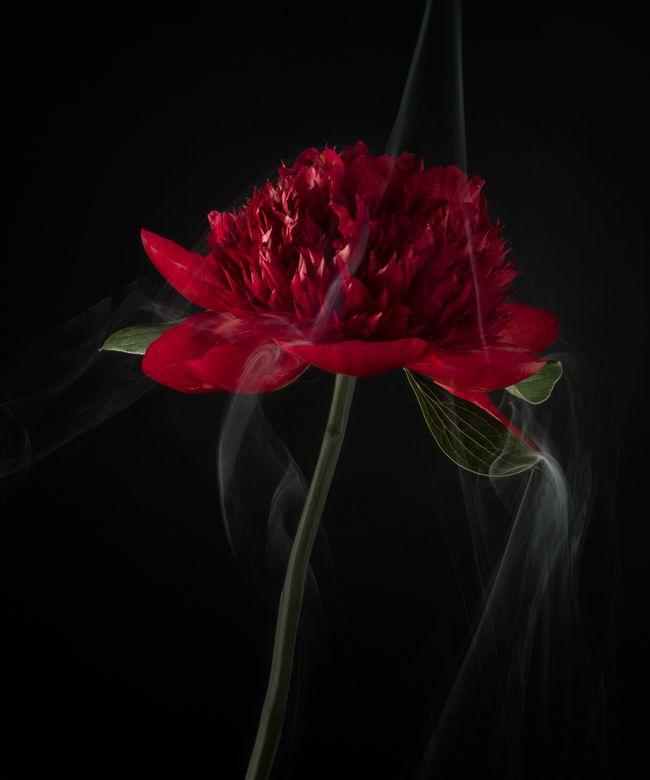 bloem-robertpeekfotografie_005.jpg