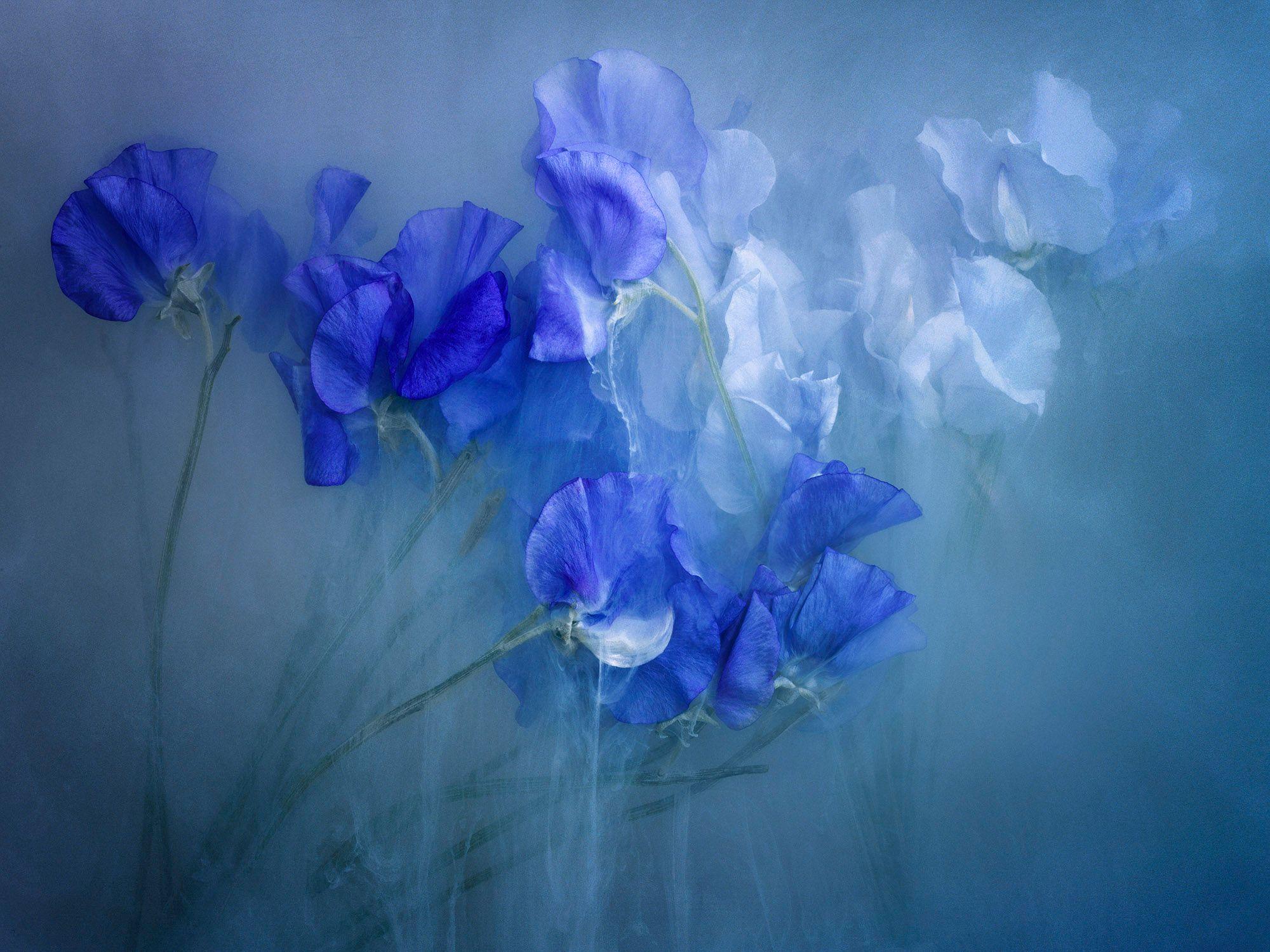Flowerpower Blue II-003.jpg