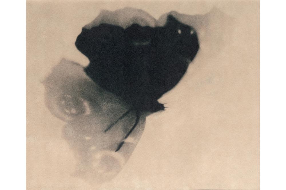 Fotografie Vlinder