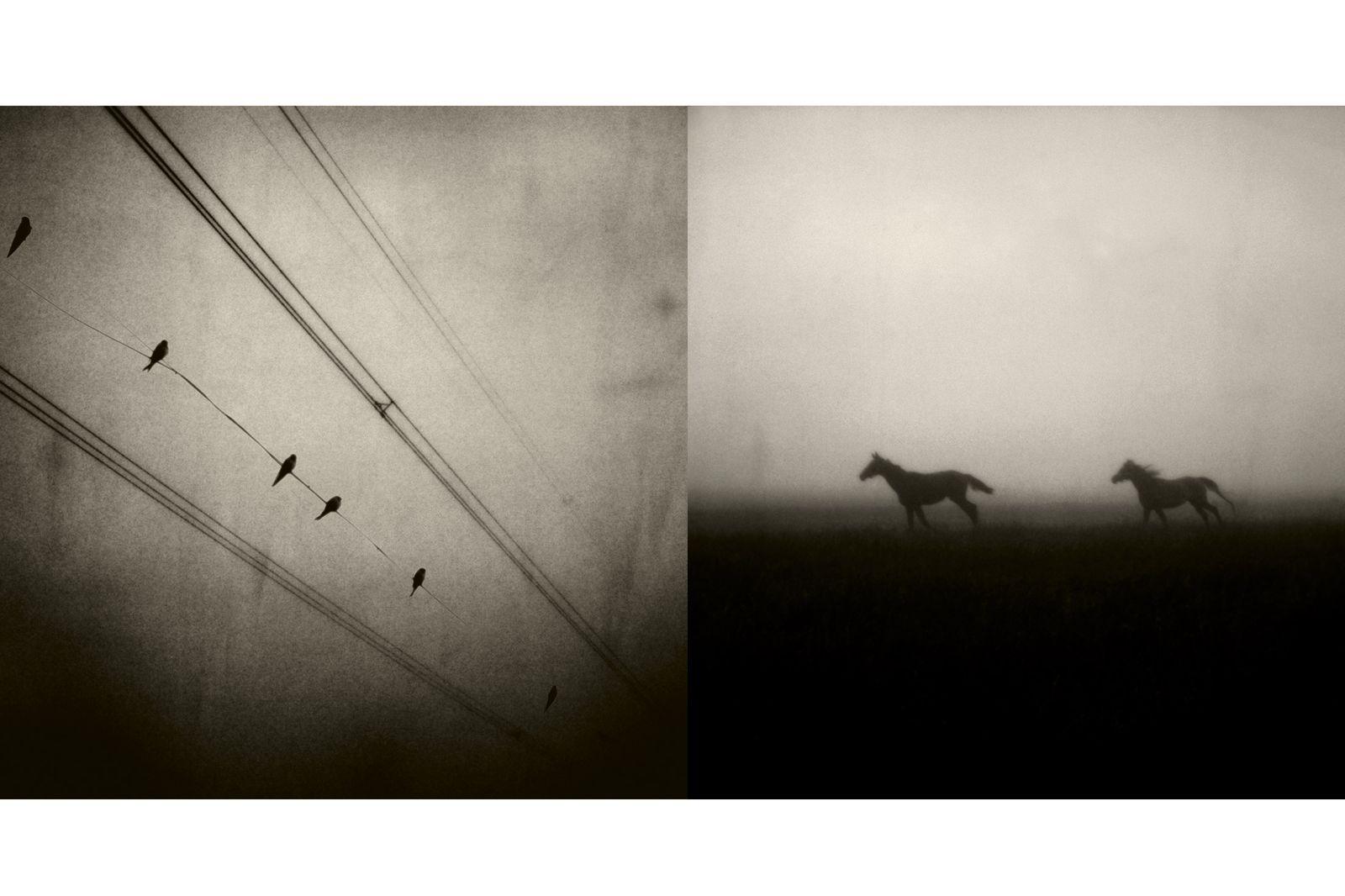 Fotografie zwaluwen-en-paarden_robertpeekfotografie