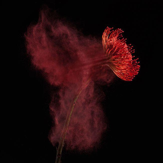 bloem_02_robertpeekfotografie