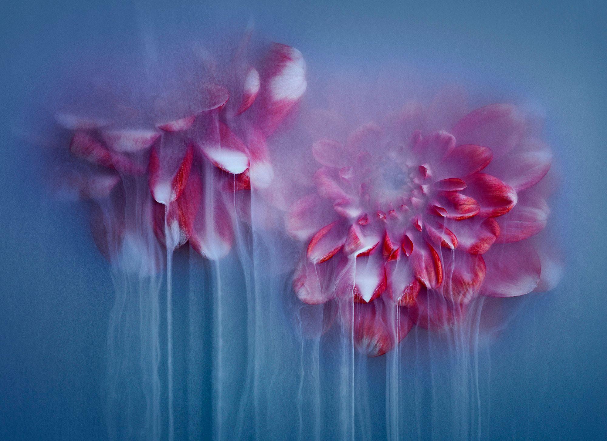 Flowerpower Blue II-018.jpg