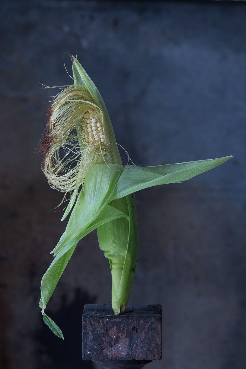 Sweet Corn, 2016