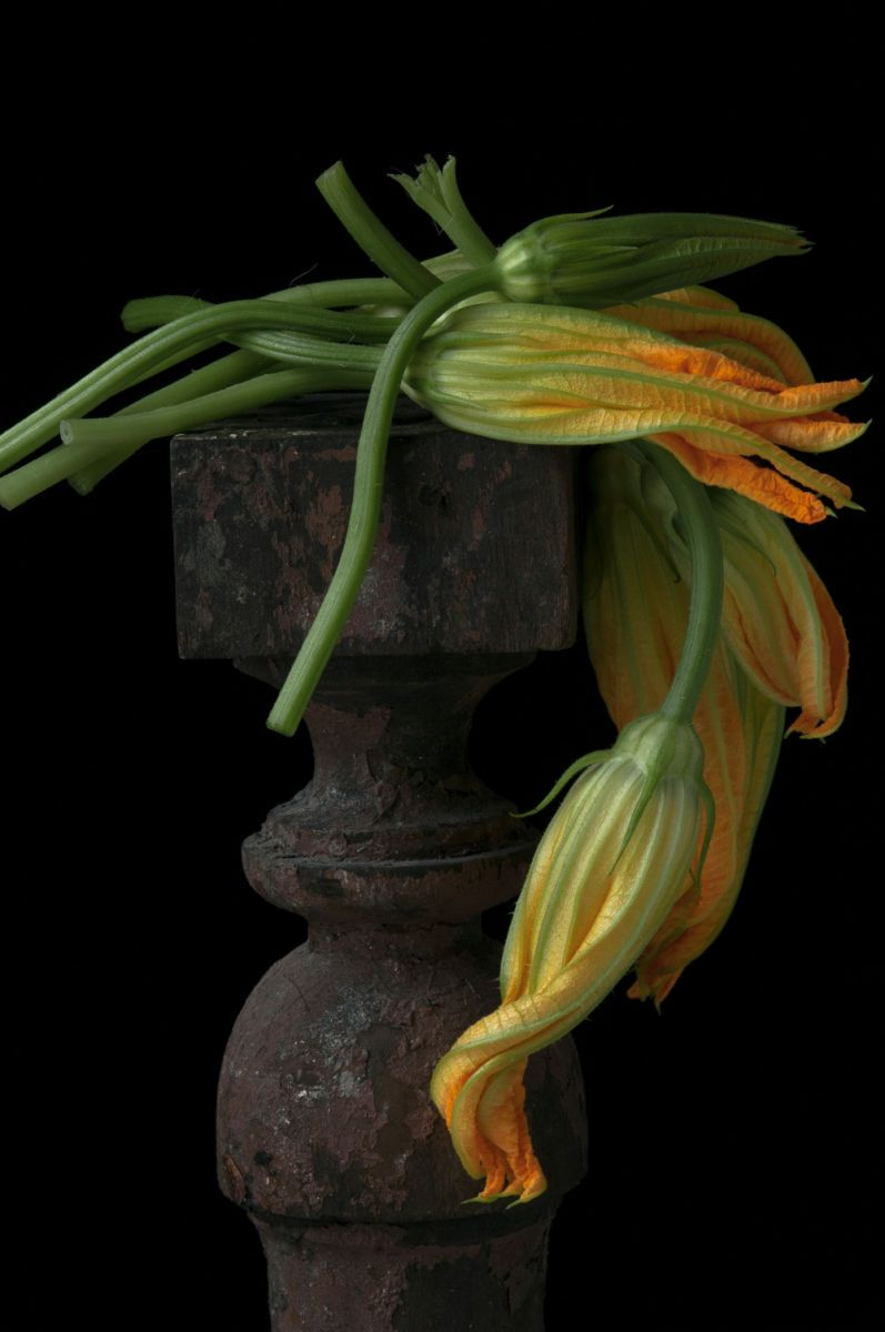 """Draped Squash Blossoms"", 2014"