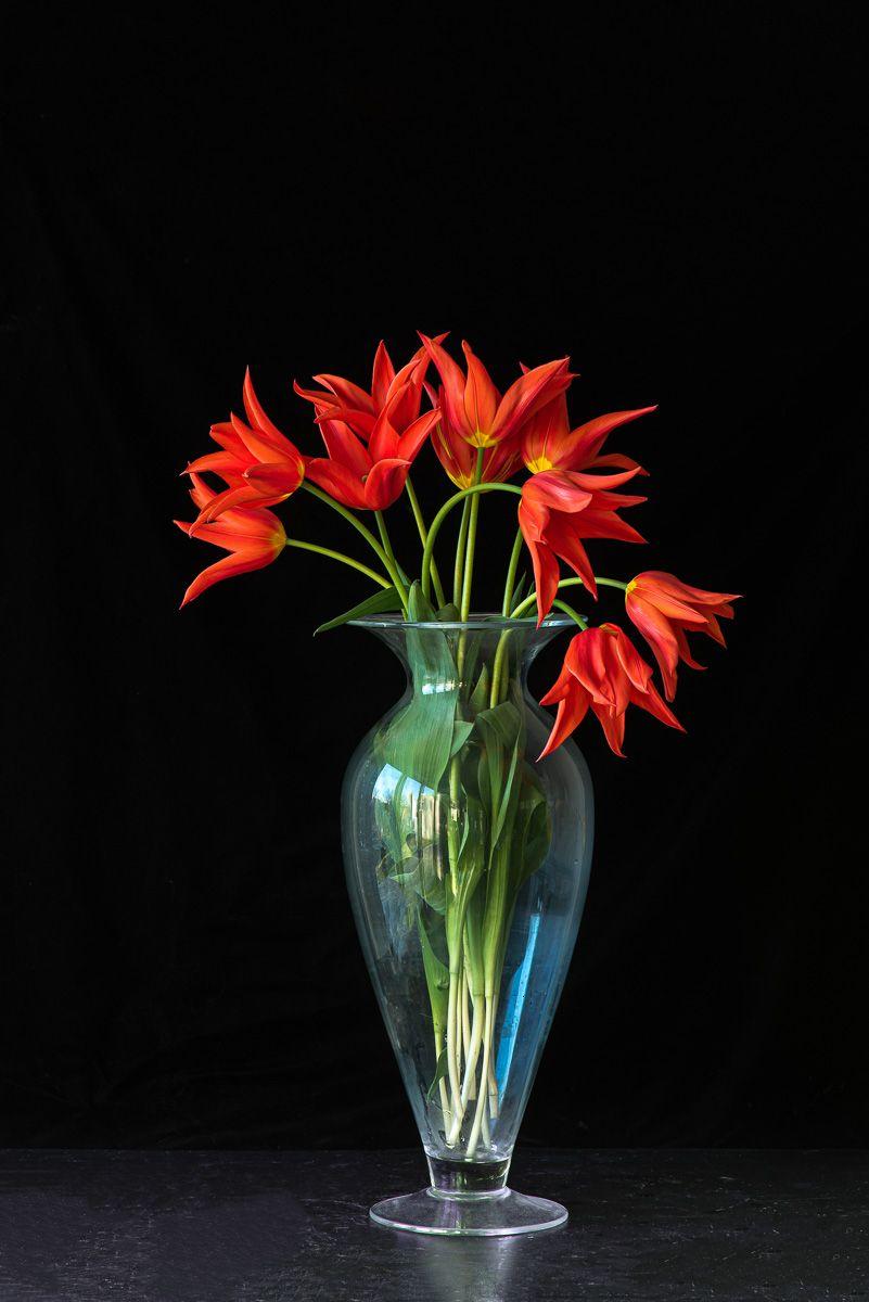 Lynn Karlin_'Ballerina' Tulips in Vase.jpg
