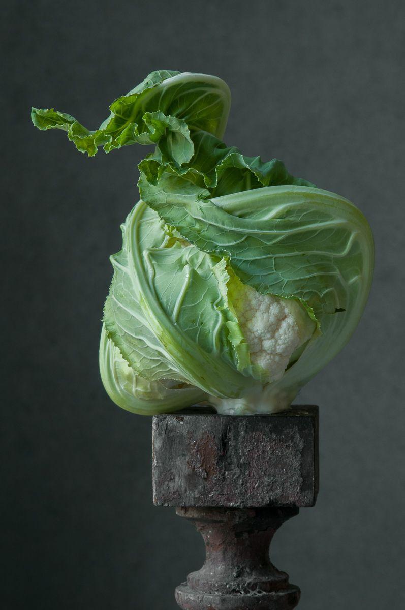 """""""White Cauliflower Freemont"""", 2013"""