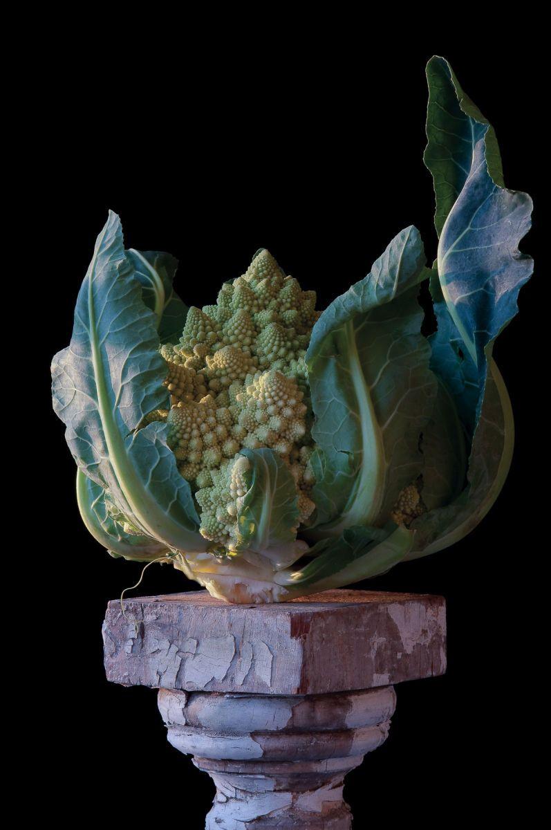 """""""Romanesco Cauliflower"""", 2010"""