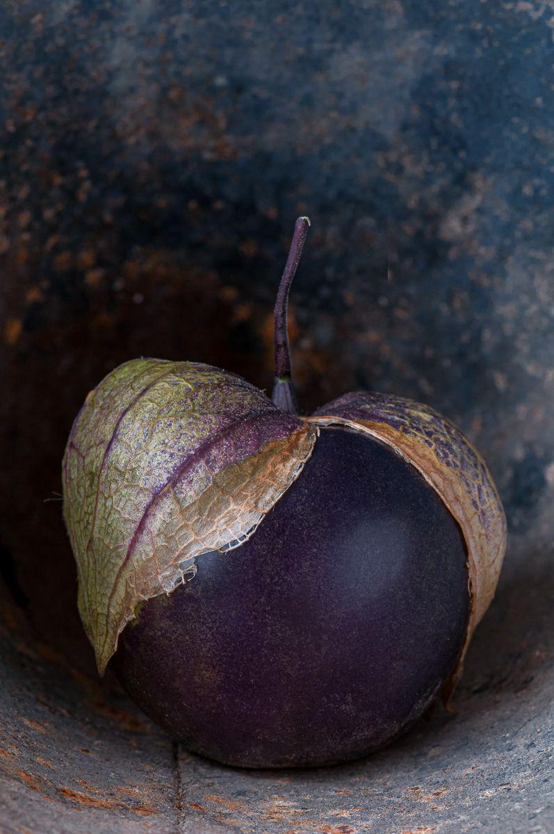 Lynn Karlin_Purple Tomatillo.jpg