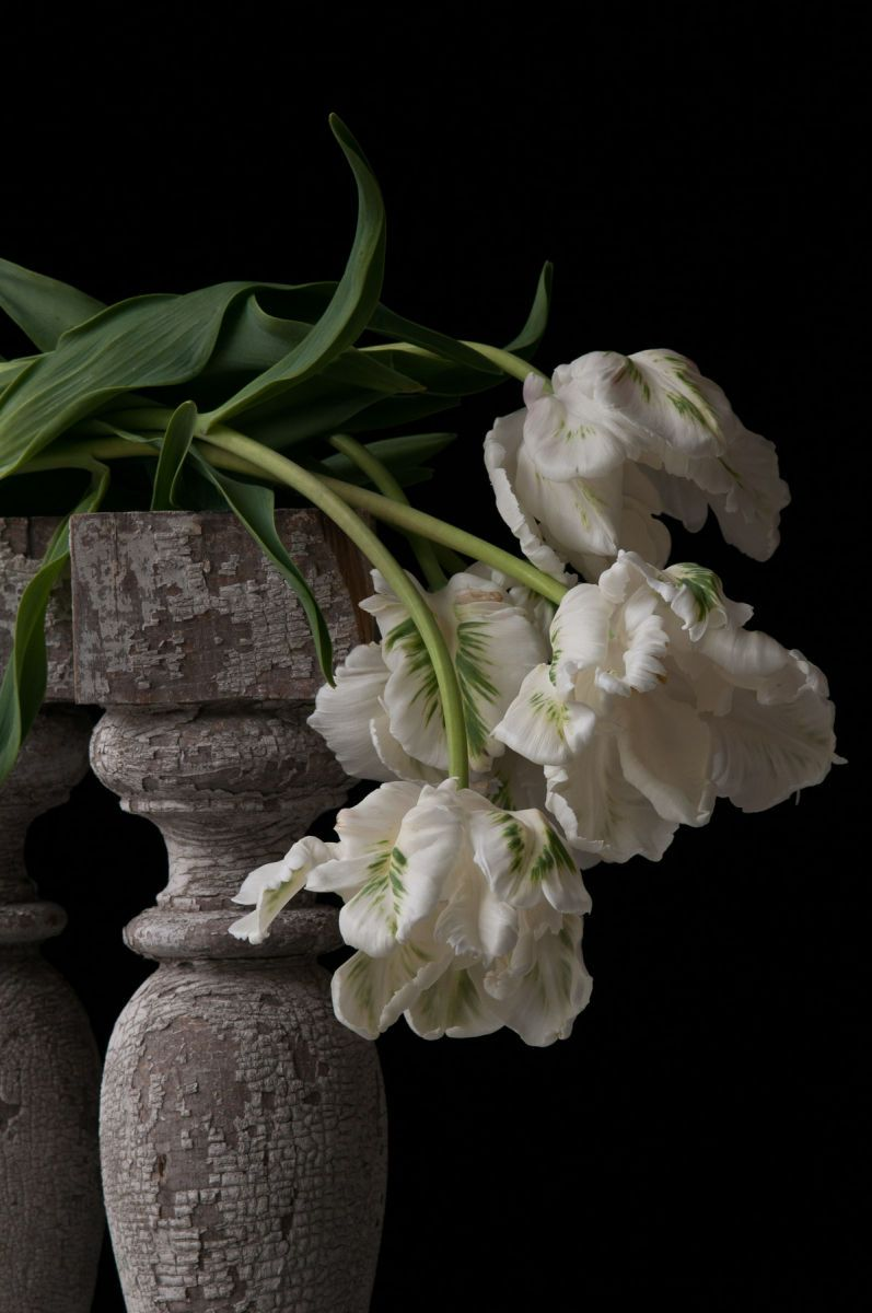 """White Parrot Tulips"", 2014"
