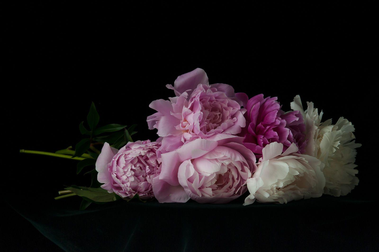 1karlin_peony_petals_17.jpg