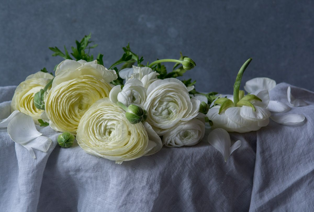1ranunculus_photo_lynn_karlin_58.jpg