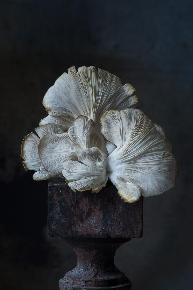 """""""Italian Oyster Mushroom"""", 2016"""