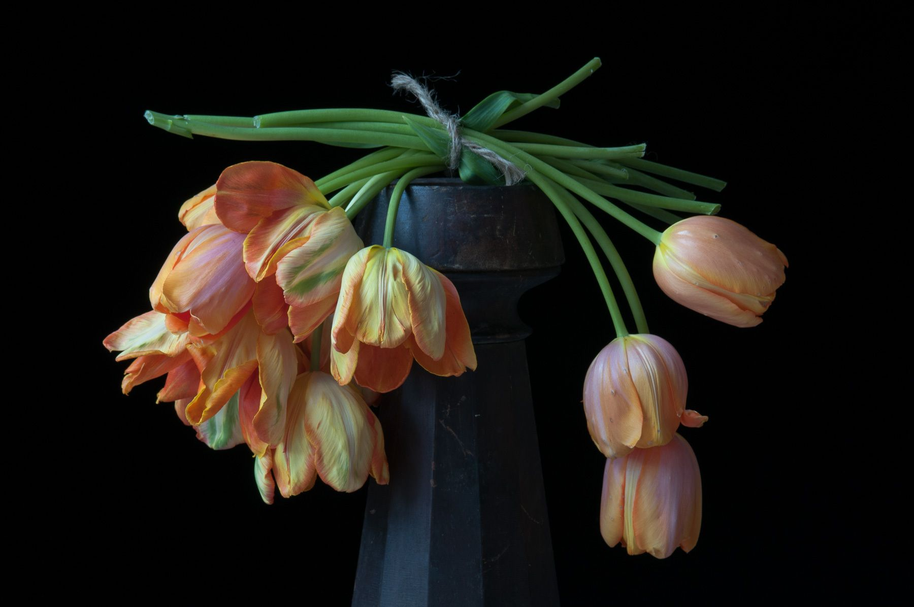 1karlin_orange_tulips_149_2.jpg