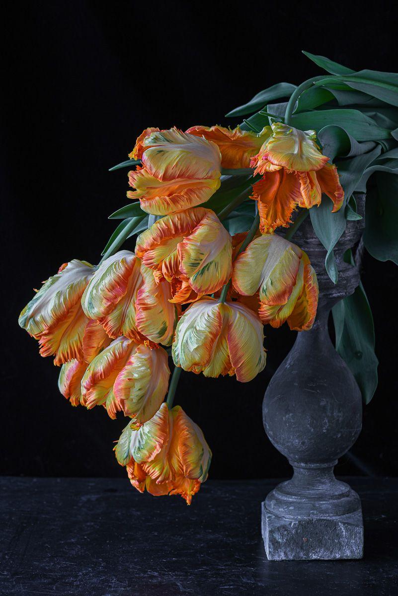 Lynn Karlin_'Parrot King' Tulips.jpg