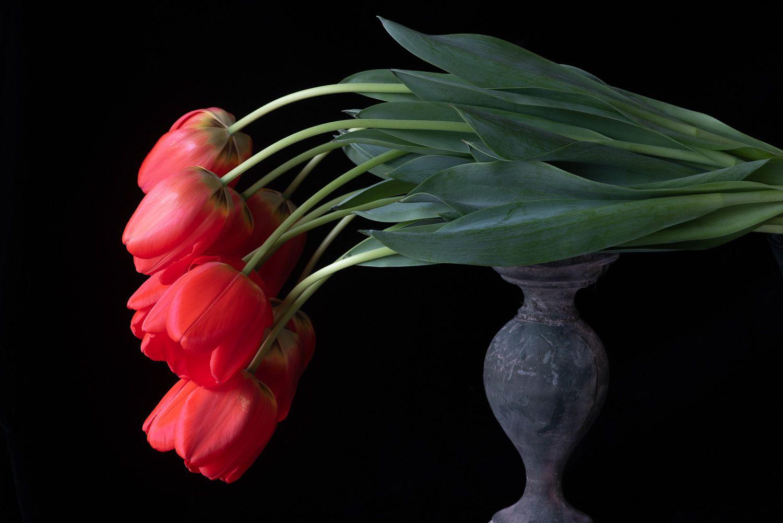 Lynn Karlin_Red Tulips-7.jpg