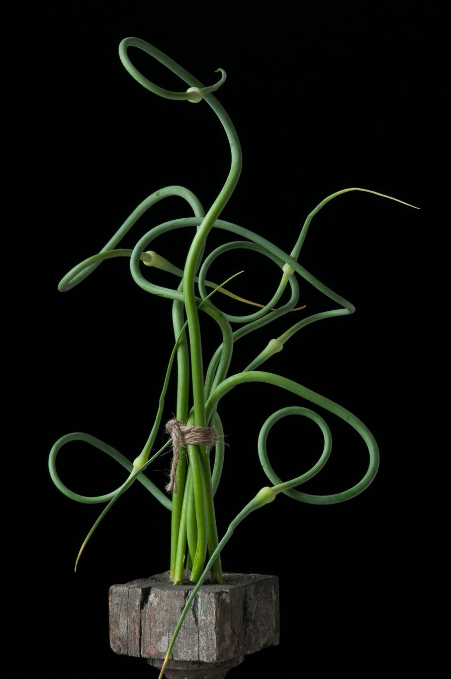 Lynn Karlin_Garlic Scapes-5.jpg
