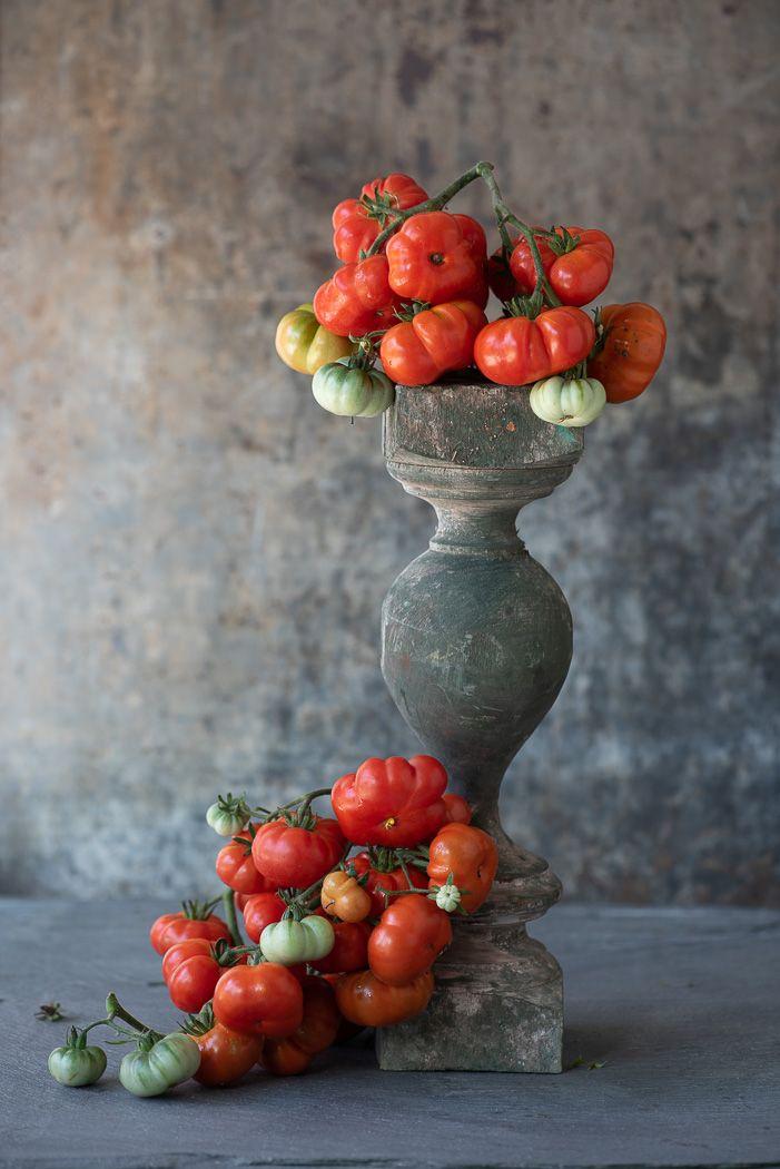 Lynn Karlin_Tomato Vines-1.jpg