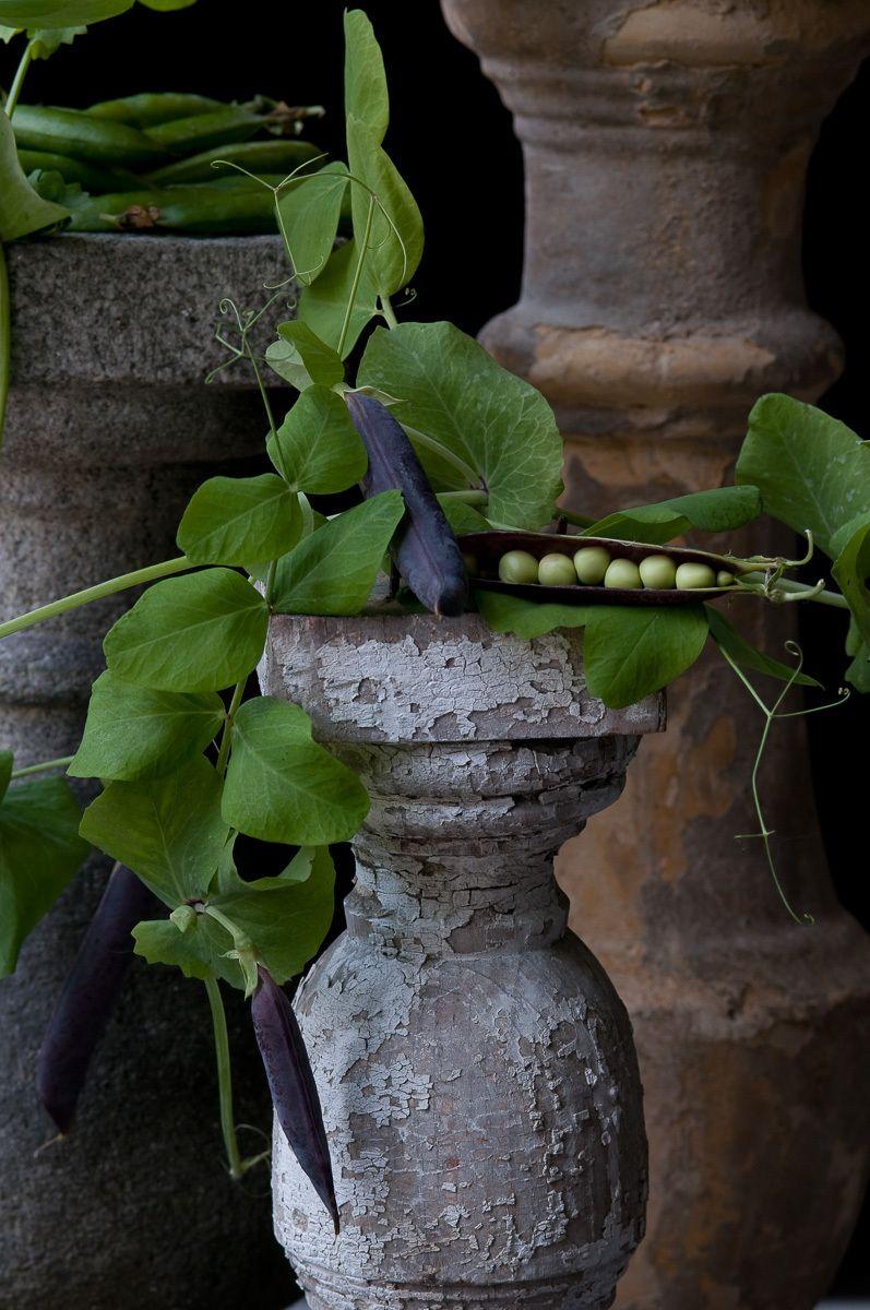 """""""Purple Podded Peas"""", 2010"""
