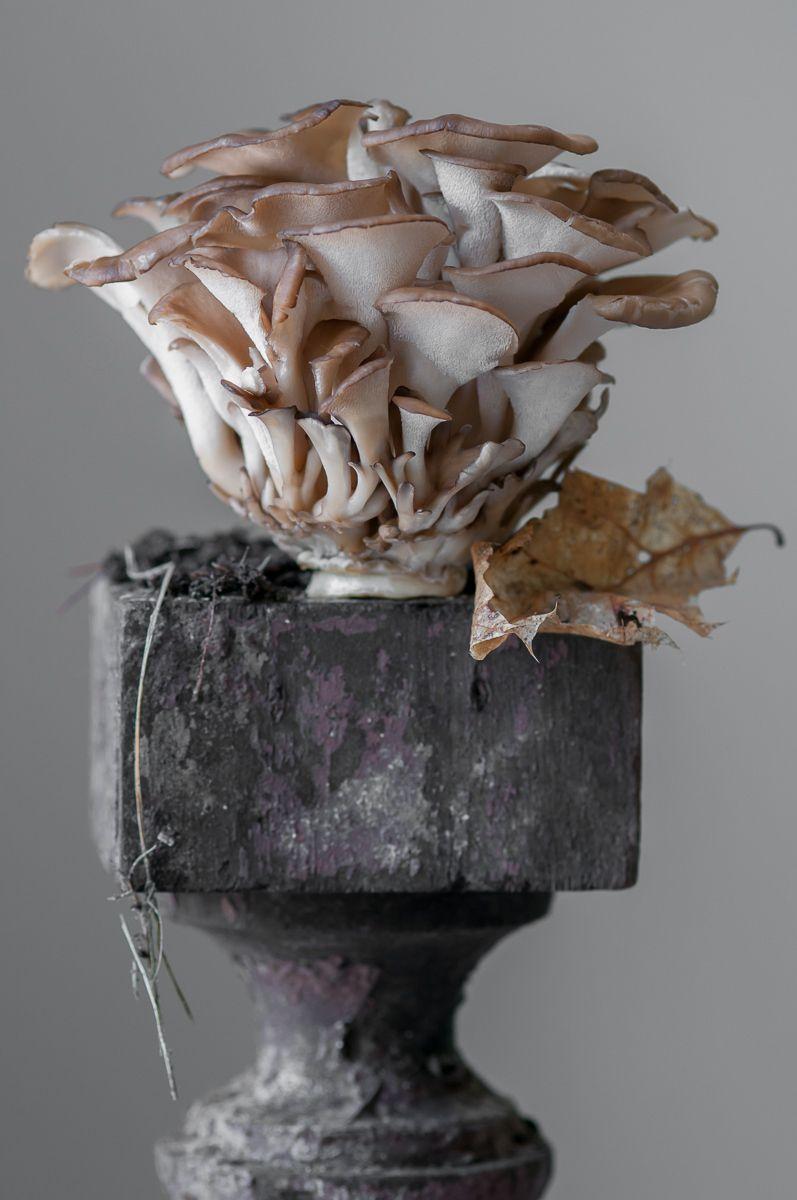 """Hen of the Woods Mushroom"", 2012"