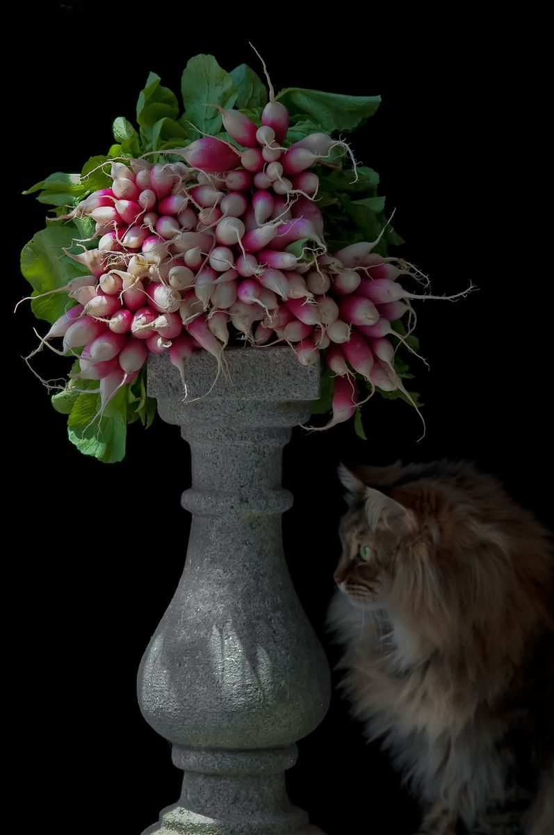"""D'Avignon Radishes with Maine Coon Cat"". 2010"