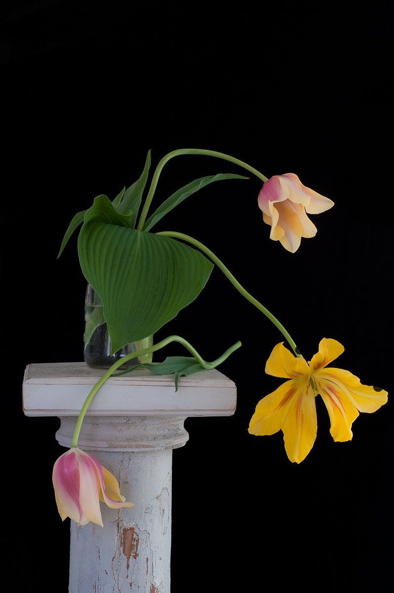 """Tulips on White Pedestal"", 2010"
