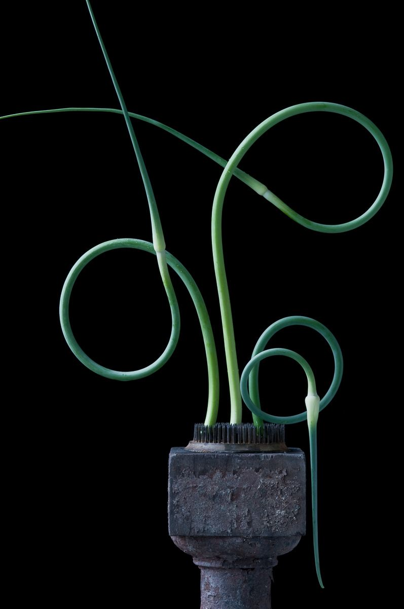 """Garlic Scapes #3"", 2011"