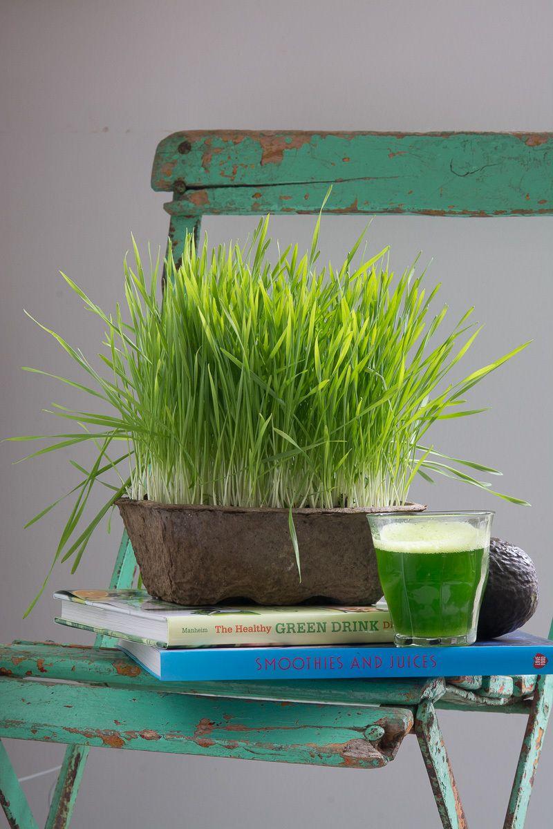 1karlin__wheat_grass_9.jpg