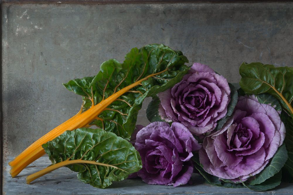 1karlin_kale_flowers_with_chard.jpg