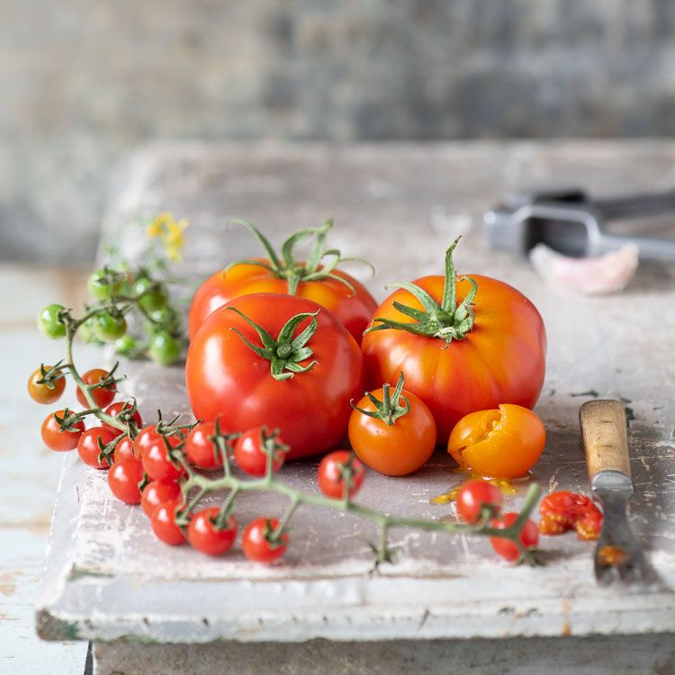 Lynn Karlin photo_tomatoes.jpg