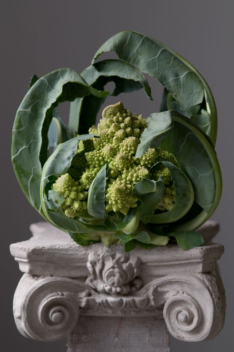 """Romanesco Cauliflower on Corinthian Pedestal"", 2012"