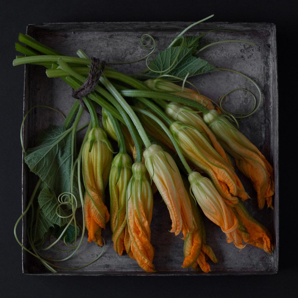 11-_karlin_squash_blossoms_19.jpg