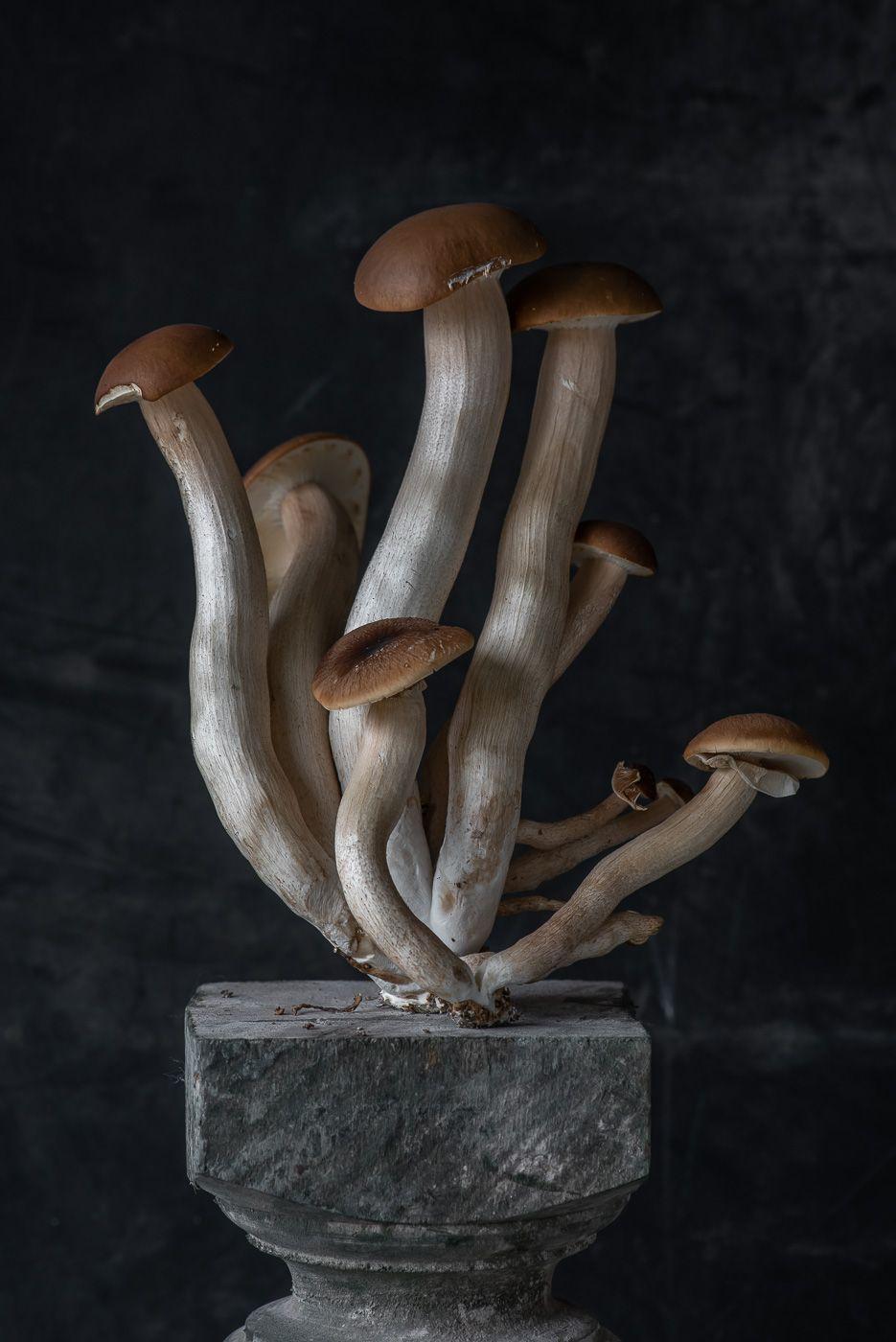Lynn Karlin_Pioppino Mushroom.jpg