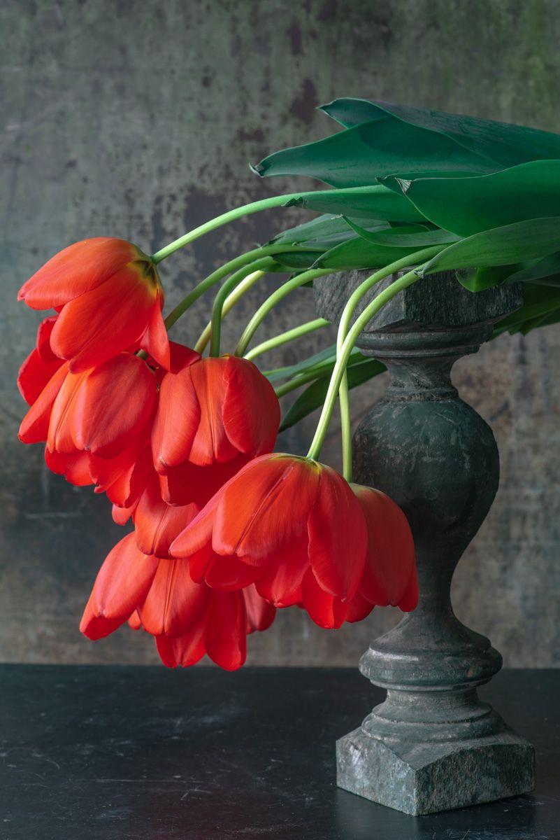Lynn Karlin_'Parade' Tulips.jpg